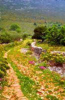 Greek Path by tnp651