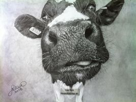 'My Old Cow' - 2013 - (Drawing) by Stevegillettart