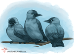 Jackdaw Trio by smokewithoutmirrors