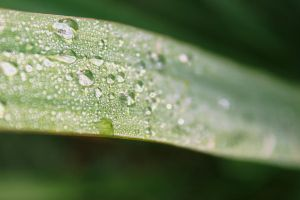 Tropical Waterdrops by Silvermoonswan
