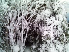 Snow Covered Trees 5 by DerpyDash64