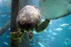 Sea Turtle 3 by cynstock