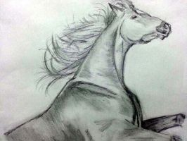 Sketch of a Horse by rachelegranger