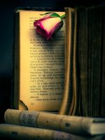 Rose On Book by Somebody--else