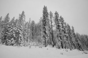 Santiam Pass by m-faccone