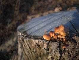 More Fungi by bitterologist
