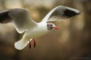 Seagull by RivenPine