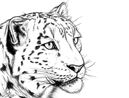 Snow Leopard by Tawned