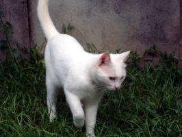 White Cat by KillerTy50