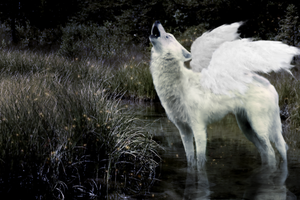 winged wolf. by imacupcake
