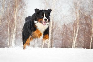 Running by DeingeL-Dog-Stock
