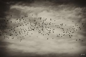 Angry birds by hrcM
