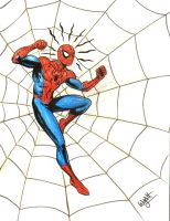 Spider In The Web by swyattart