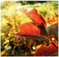 Colors of Autumn by selley