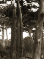 Trees GGP1 by arterie