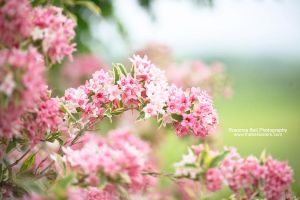 Spring Colours - Day 118 by rosannabell