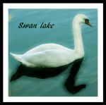 Swan lake by What-is-worth