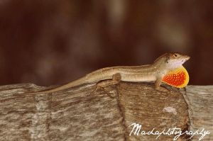 Lizard. by madaphotography