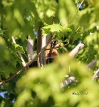 Nesting by cindy1701d