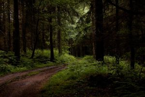 Woodland Path by 35mil