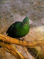 Green Touraco by Xiuhcoalt