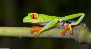 Curiosity by erezmarom