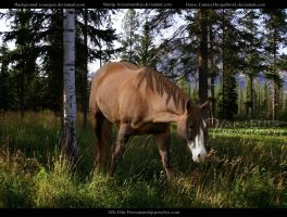 All Alone by Horsemanship