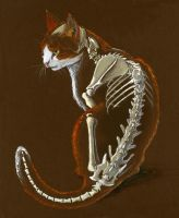 my kitty with his skeletal system by atnason
