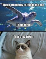I Has Turtle by Pagerage5