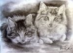 Kittens by scenceable