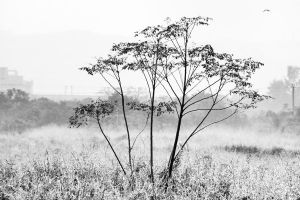 Lonely Tree by johnchan