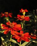 Sunset blooms by TheBrassGlass
