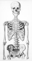 Skeleton Half by webfoe