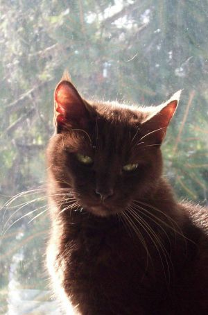 __my_brown_cat___by_Punk_Rock_Michelle.j