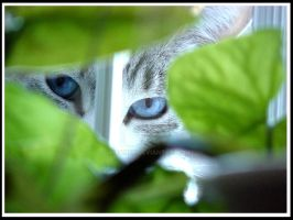 Watching You by jmeaney