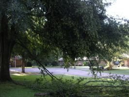 Broken Oak Front Yard by robshyster