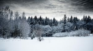 Snowlandscape by 0ls