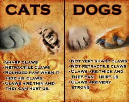 Cat n' dog claws differences by RIOPerla