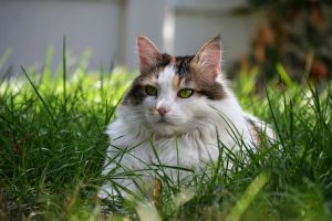 Cat In The Grass 1b by xenomorph1138