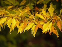 Overhanging Leaves II by Softspoken-One