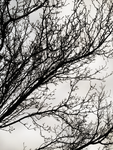 Winter Branches by IridescentCatalyst