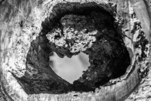 Hole In The Trunk Of My Heart by K-liss