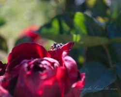 Hold On by AngelaLeonetti