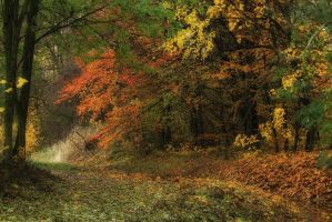 Fall by lichtschrijver