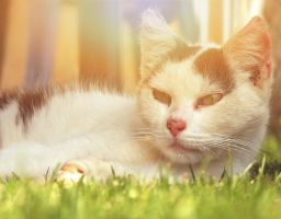 Cat life by TheJokerCZ