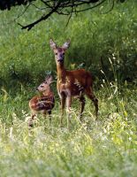 Bambi and Mom by miezbiez