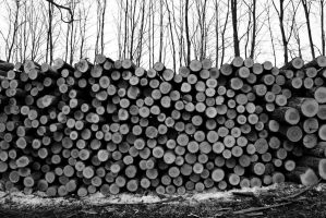 Graphic Logs by myrnajacobs