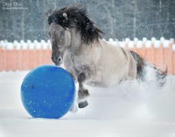 Horse winter games by Olga5