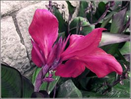 flower by jef-photos
