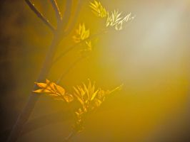 Gold Light by sebastopolgoose